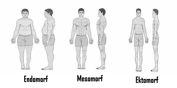 Kehatüübile vastav treening ja toitumine